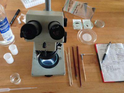 7 Schritte zum eigenen Mikrometeorit: Schritt 5 – Die Probe nach Mikrometeoriten durchsuchen